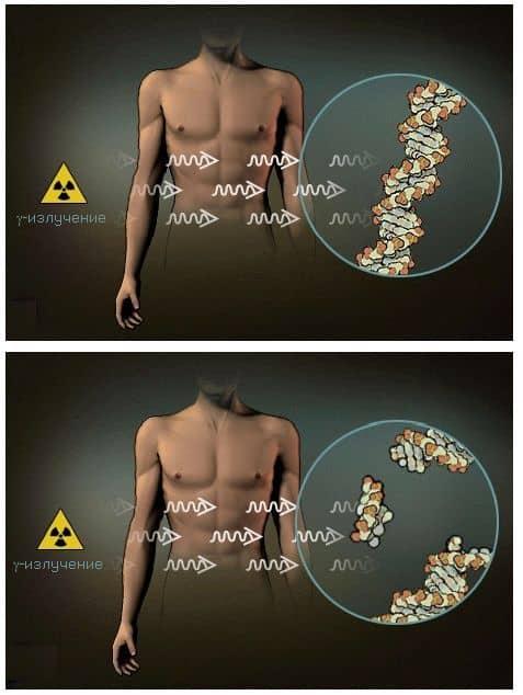 разрушительное для живых организмов действие γ-излучения