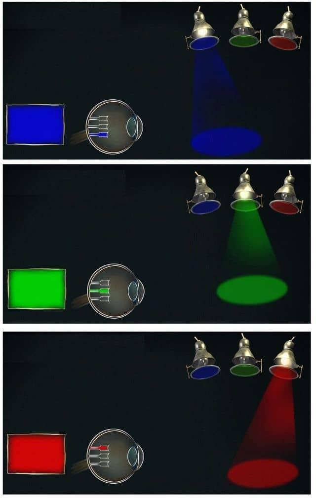 восприятие красного, зеленого и синего цветов глазом человека
